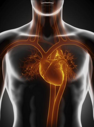 Findings may promote adult heart tissue regeneration