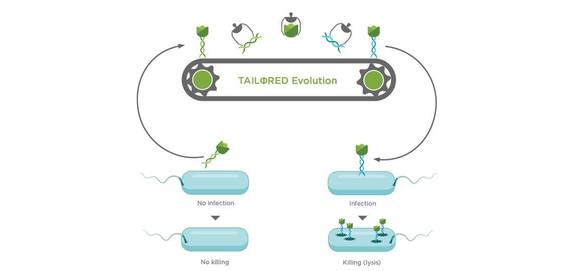Tailored Evolution