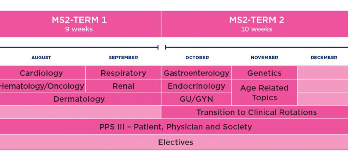 MD Program curriculum schematic year 2 - Fall