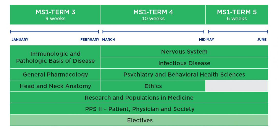 MD Program curriculum schematic for year 1- Spring