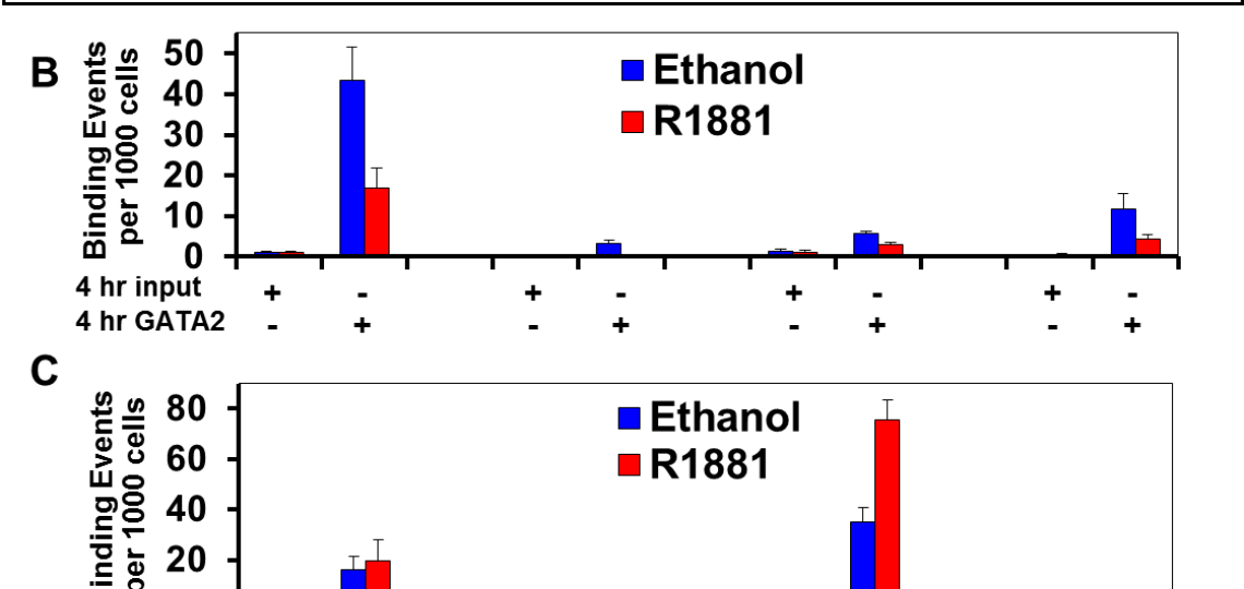 ChIP-Seq demonstrates recruitment of GATA2 and AR to the AR gene locus in LNCaP cells