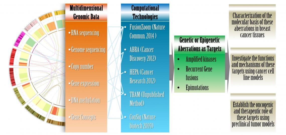 Our multidisciplinary approach
