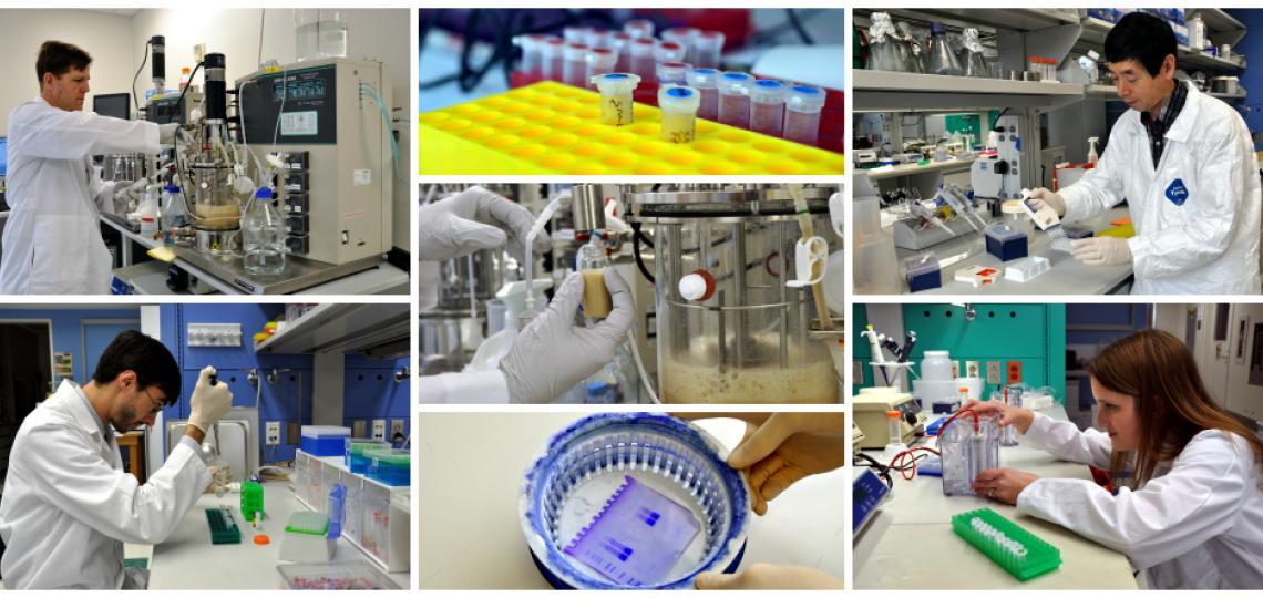 Feigin Center laboratories