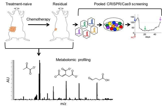 Metabolomics of tumor & immune cell populations & functional genomics to combat TNBC therapy resistance