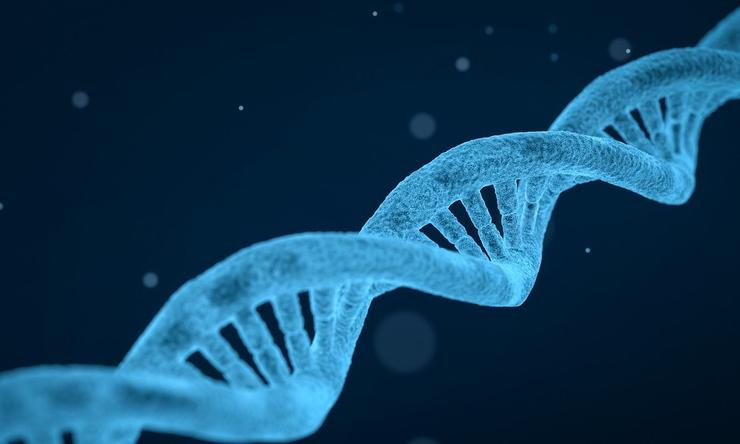 An illustration of a DNA double helix.